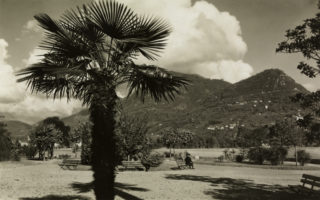 NL08: Exoten am Gotthard: Die Veränderung der Landschaft durch importierte Pflanzen