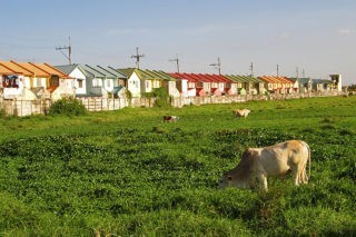 A cow peacefully grazes on an open field, a real estate development site with a row of houses and electrical poles in the background. Such landscapes are commonly seen around the world – and it could be just about anywhere there is arable land. In this case it is in Manila where, as in many countries, we find the rise of mixed land uses, the enclosure of formerly public land for private uses, and the conversion of agricultural land for industrial, commercial and real estate purposes. Although arable land is rare and valuable (only about 4% of the earth's surface) this is a familiar pattern – urban eats rural, and rural eats wilderness. The ambition to break this pattern is at the heart of the FCL Global programme. © University of the Philippines Population Institute, «Spaces in Transition: Mapping Manila's Peri-Urban Fringe,» with the kind permission of Prof. Arnisson Ortega, Syracuse University.