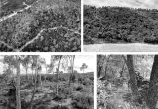 Compiled field notes from site vegetation inventory of forest plots © Chair of Being Alive, ETH Zurich